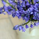 Bluebells by janrique