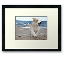 Border Collie Puppy on the Beach Framed Print
