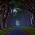 Unmarked Road by Peter B