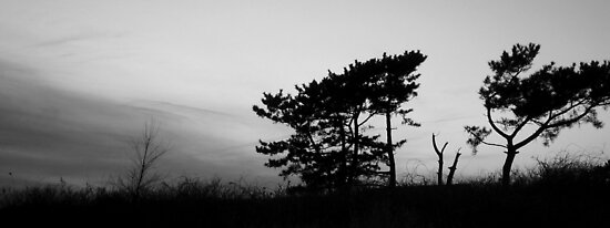Trees in Twilight by TomG88