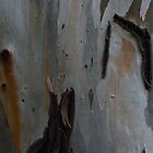 Bark of eucalyptus by gaiawse
