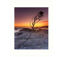"""That Tree"" ∞ Binalong Bay, Tasmania - Australia Art Print"