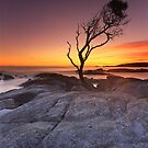 &quot;That Tree&quot;  Binalong Bay, Tasmania - Australia by Jason Asher