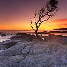 """That Tree"" ∞ Binalong Bay, Tasmania - Australia by Jason Asher"