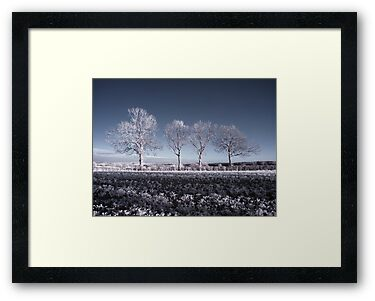 Winter Trees by David Cooper