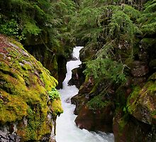 Avalanche Creek by Jeff Johannsen