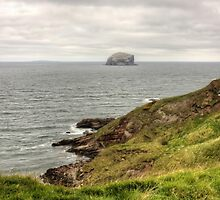 The Bass Rock by Tom Gomez