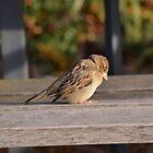 Bird On The Bench by Mc240