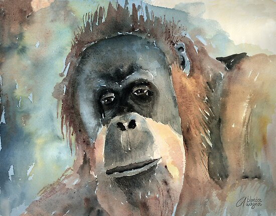 Orangutan by arline wagner