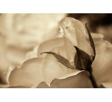 Romance in  sepia Photographic Print