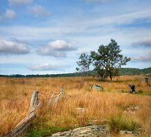 Rustic Rurality ~ Ulandra Reserve NSW by Rosalie Dale