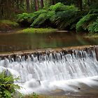 Donnelley's Weir (Healesville) by Sheryle  Griffiths