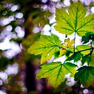 Just leaves and bokeh by Vicki Field
