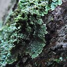 Green Lichen by mindy23