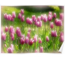 Tulips in the Garden Poster