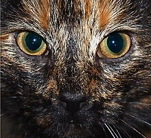 Minx the cat. by Roly01