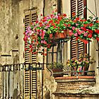 New Blooms; Old Walls-Cesi, Italy by Deborah Downes