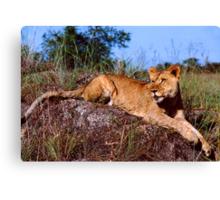 Lion Resting on Rock Canvas Print