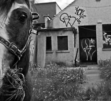 Inner city horse by Esther  Moliné