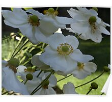 White flowers bending in wind Poster