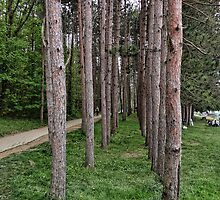 Tunnel of Trees by vigor