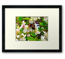 The Darling buds of May Framed Print
