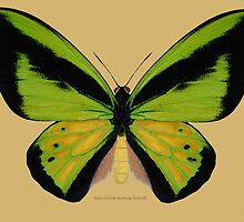 Male Goliath Birdwing Butterfly by Walter Colvin