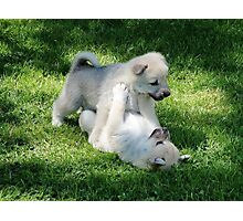 Playful Puppies Wrestling Photographic Print