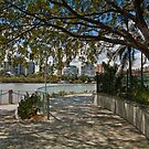 Tree Overhangs, Brisbane River Path Australia by PhotoJoJo