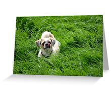I`m sorry, lost for words on this one :-) Greeting Card