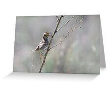Juvenille Sparrow Greeting Card