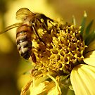 honeybee on a fall flower by tego53