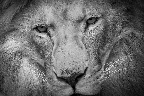 Eyes of Pride by Mark Hughes