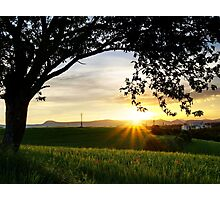 Sunset under the Tree Photographic Print