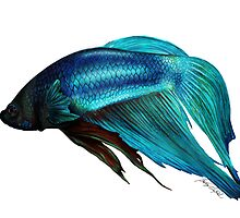 Betta Fish Digital Painting by Brittany LeBold
