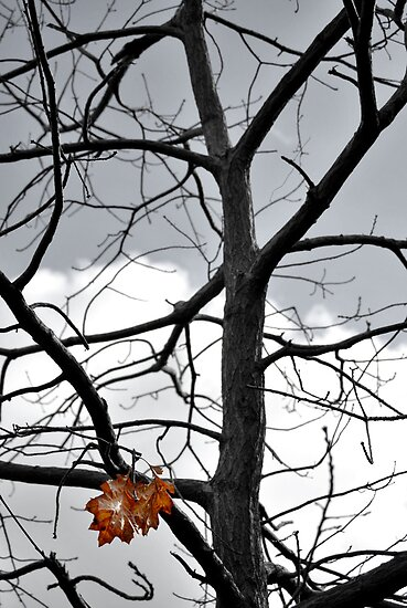 Halloween Tree by Pschtyckque