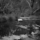 Lake at Watson's Creek  by Pauline Tims