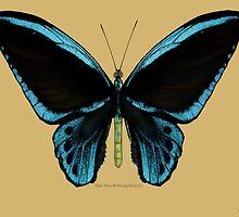 Blue Birdwing Butterfly by Walter Colvin