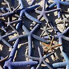 Blue Starfish  by suellewellyn