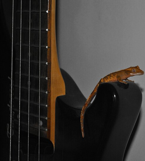 Gecko Bass by SkinnyJoe