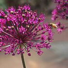 Purple flower, bizzy bee by dfrahm