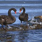 Black swans by mechelle142