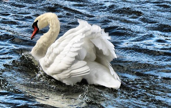 My swan by Meeli Sonn