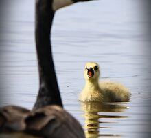 Mom look at me! by Heather King