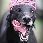 Celebrate like a Princess by GreyhoundSN