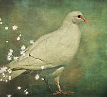 The Magical White Dove by Scott Mitchell