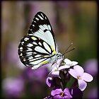 ~ Butterfly ~ by Leeo
