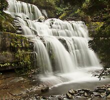 Liffey Falls, Tasmania by Julia Harwood