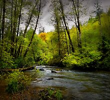It's What I See ~ Whittaker Creek ~ by Charles & Patricia   Harkins ~ Picture Oregon