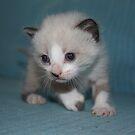 Cute kitty II by garigots